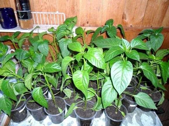 Planter des semis en pleine terreAgriculture - Culture de ...